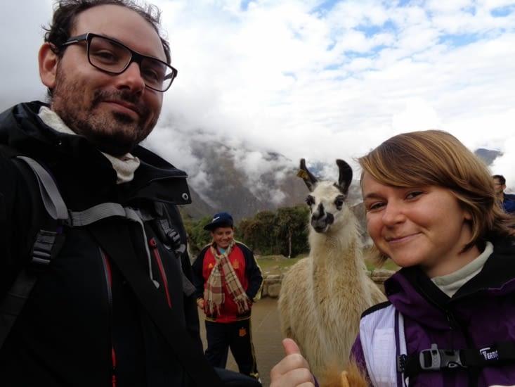 Selfie avec un alpaga