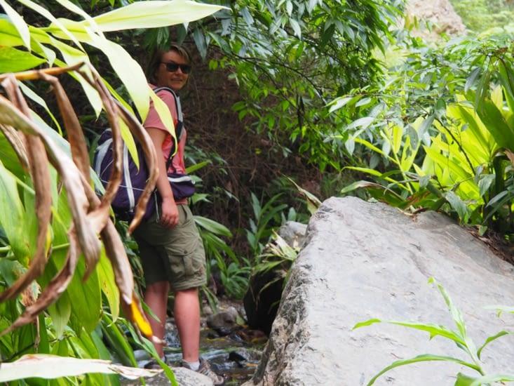 Yoyo s'aventure dans la haute jungle