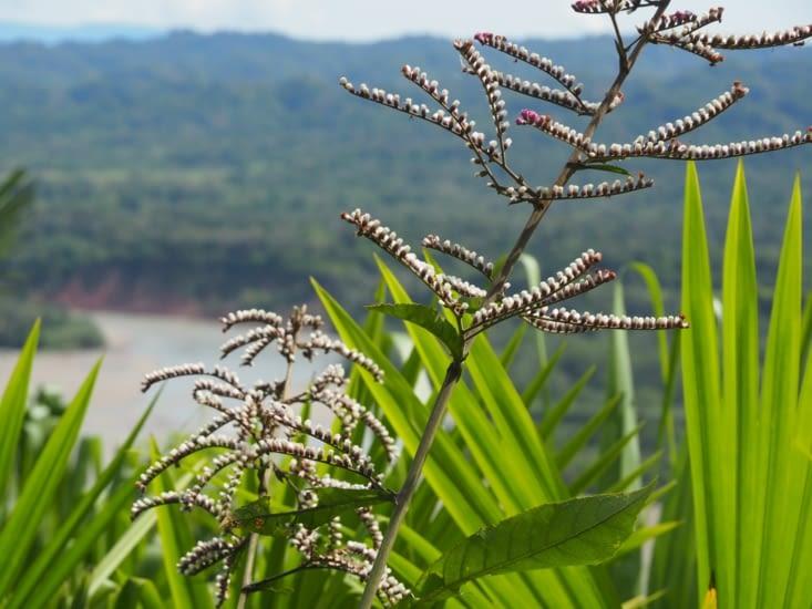 La flore de la jungle