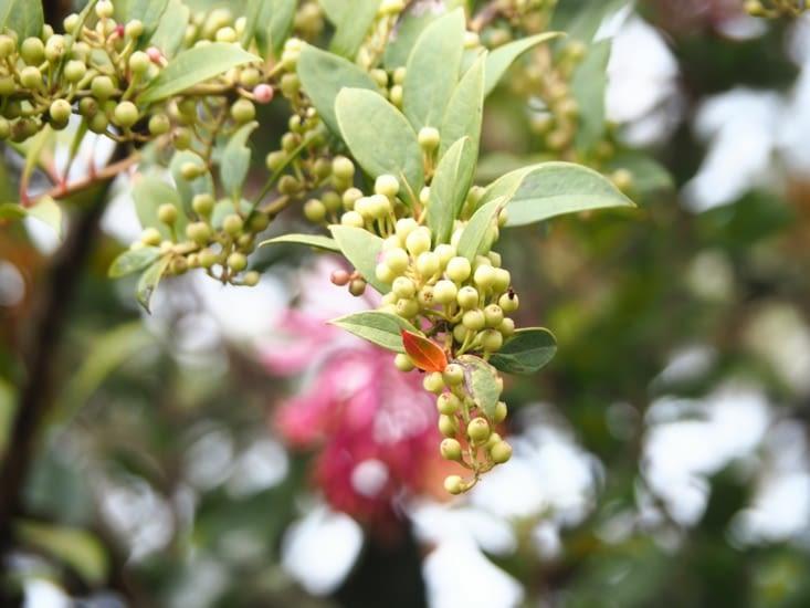 La flore montagneuse en sortie du parc Manu