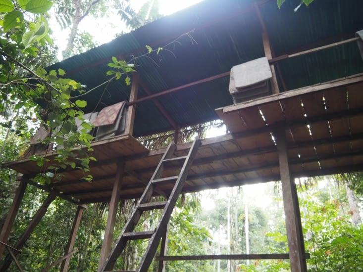 Notre cabane dans les arbres pour l'observation des tapirs