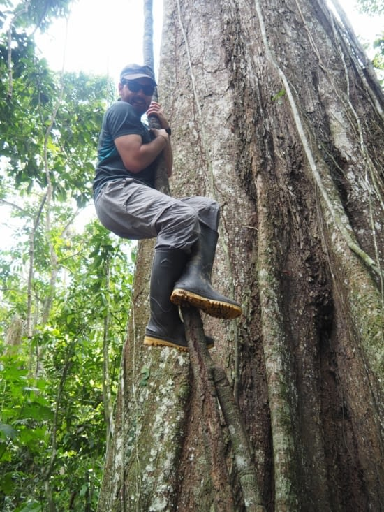 Ronron futur Tarzan ?