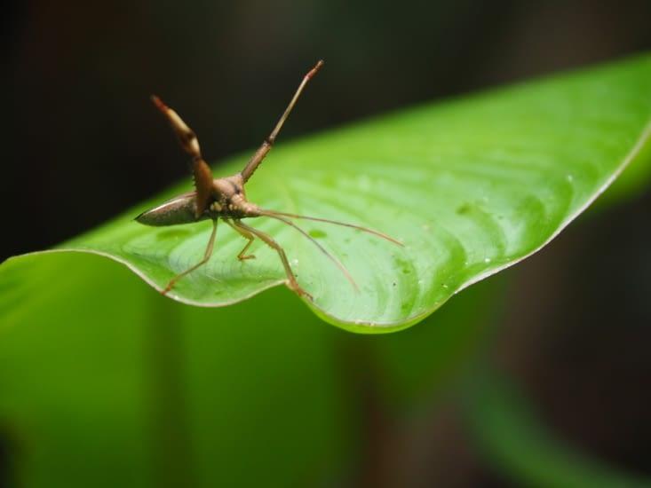 Un insecte super dangereux