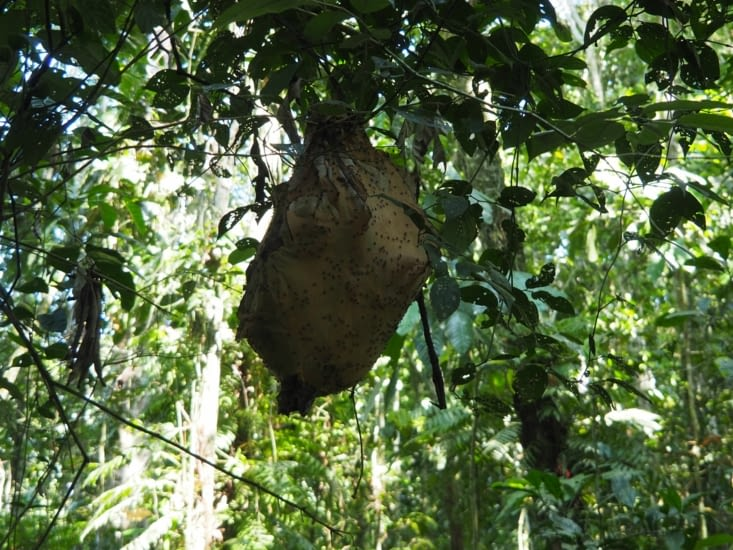 Un nid à fourmis