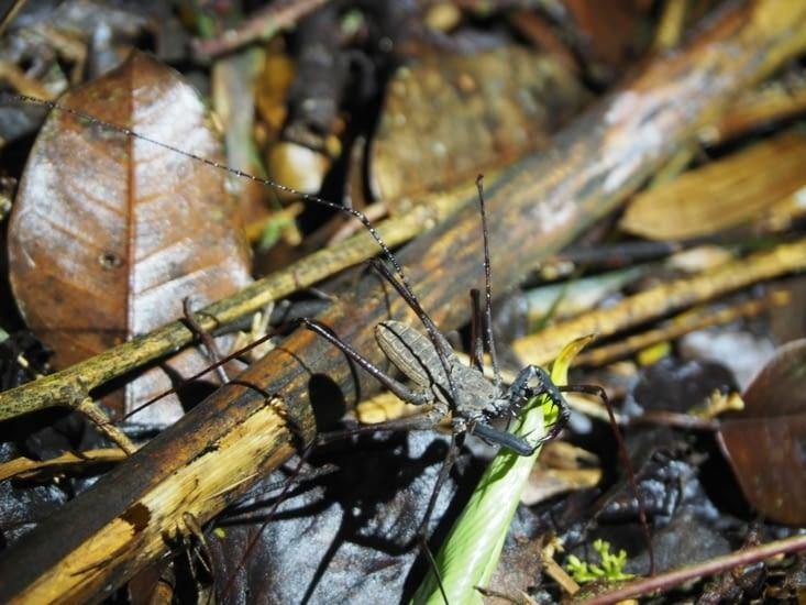 Une araignée scorpion