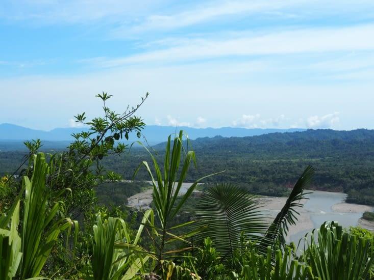 Vue sur la rivière et la jungle du parc Manu