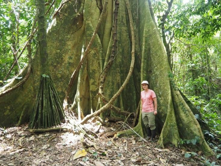 Yoyo (et sa super dégaine de la jungle) devant un ficus géant dans la jungle du Manu
