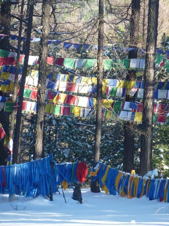 Dans les bois, les foulards ornent les branches par centaines