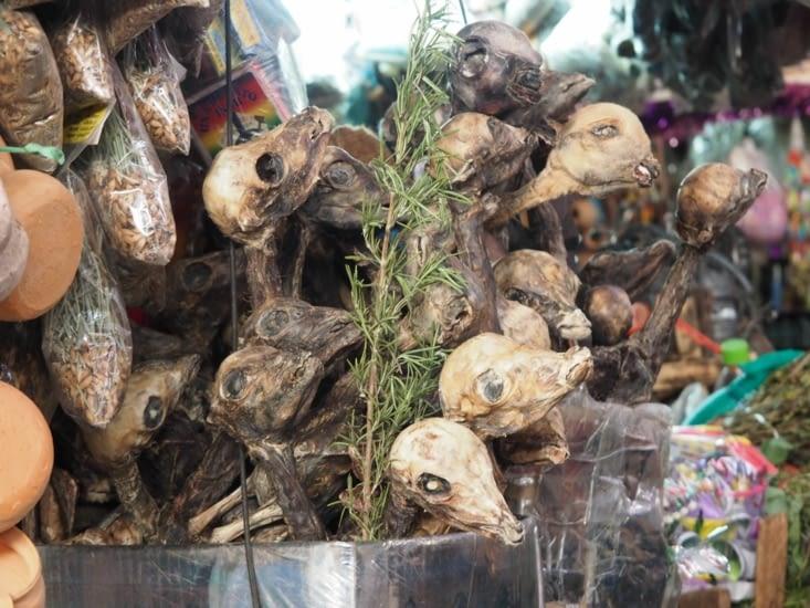 Des foetus de lamas dans le marché d'Arequipa