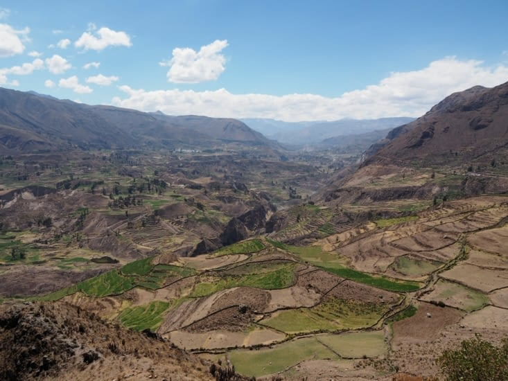 Les productions en terrasse du Canyon del Colca