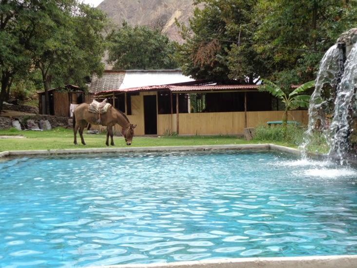 Pause détente à la piscine bien appréciée, même pour la mule ;)