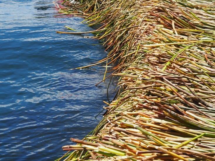 Les roseaux utilisés pour construire les iles flottantes
