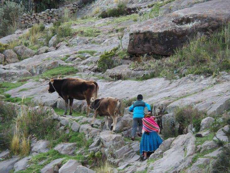 Les voisins rentrent également leurs vaches