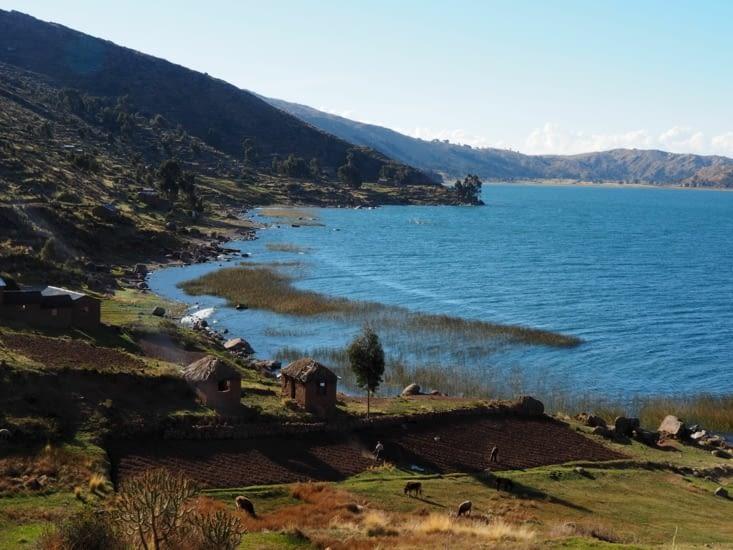 Paramis : sur les rives du lac Tititcaca, des champs labourés à l'essoufflement