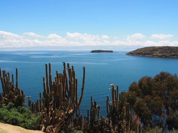 Des cactus sur l'Isla del Sol