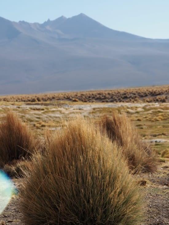 La végétation aride du parc national du Sajama