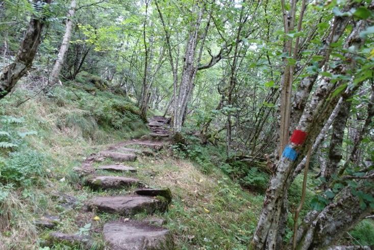 De la marche dans les bois au dessus de Balestrand