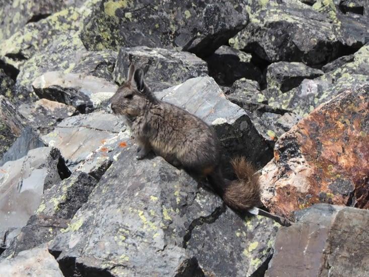 Un curieux animal croisé entre le Condoriri et le Huayna Potosi