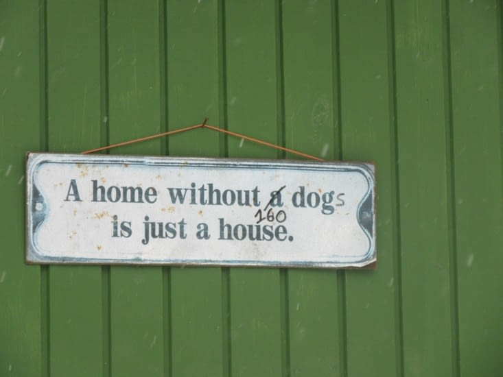 A home without 160 dogs is just a house