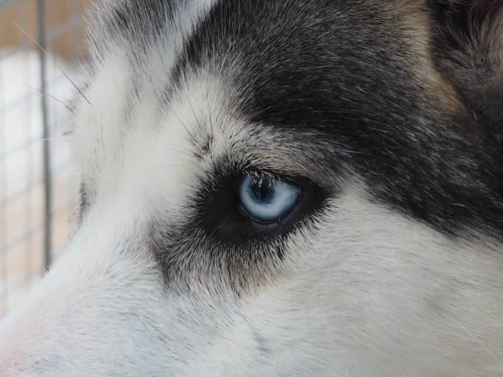 Les beaux yeux bleus !