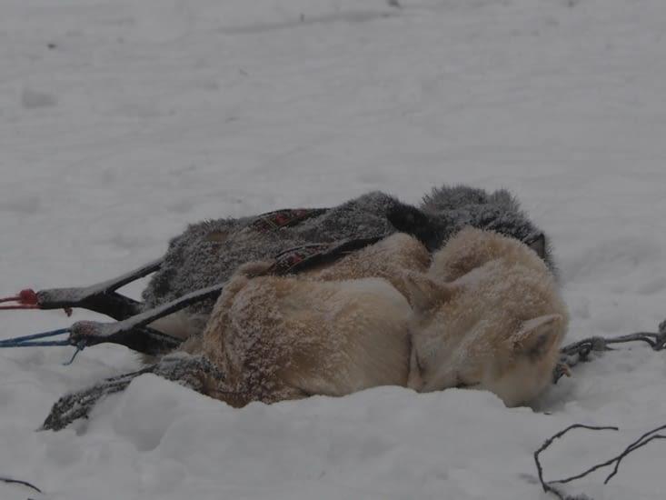 Les chiens se retrouvent ensevelis sous la neige pendant le repas