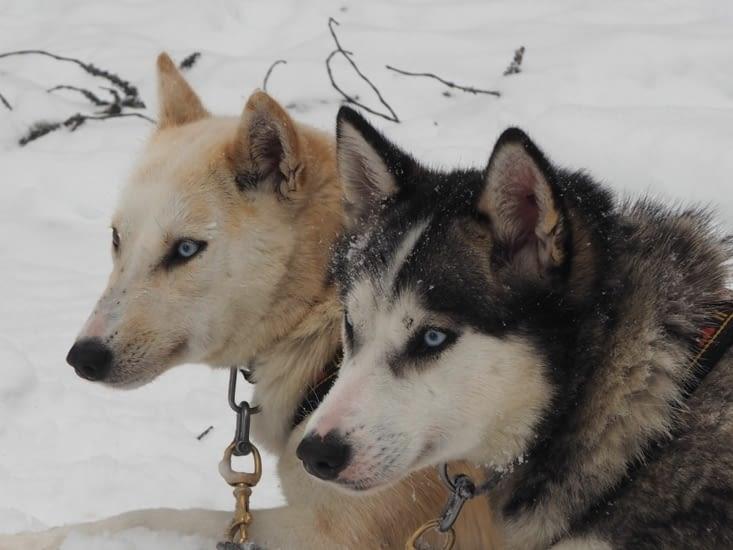 Portraits de chiens de tête