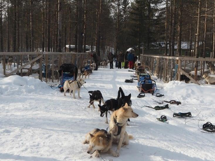 Préparation des chiens au chenil