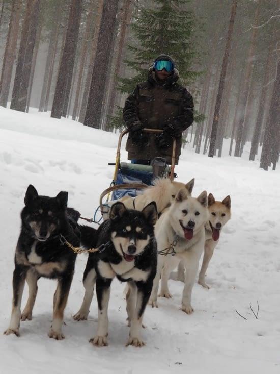 Victor et ses chiens
