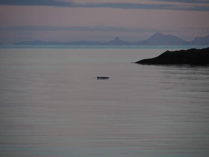 Un dauphin passe proche de A