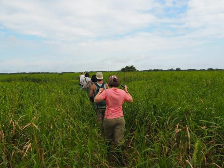 Le petit groupe à recherche de l'anaconda
