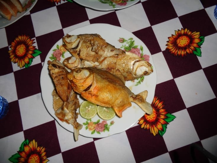 Les piranhas sont servis pour le repas