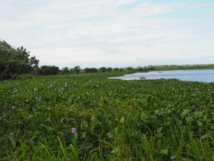 L'étang de la pampa bolivienne qui abrite des anacondas