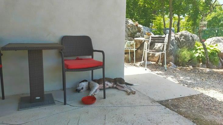 Bucky attend que la chaleur passe