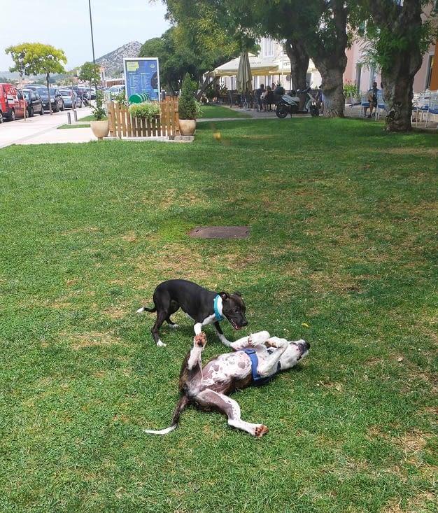 Partie de jeu avec une petite chienne