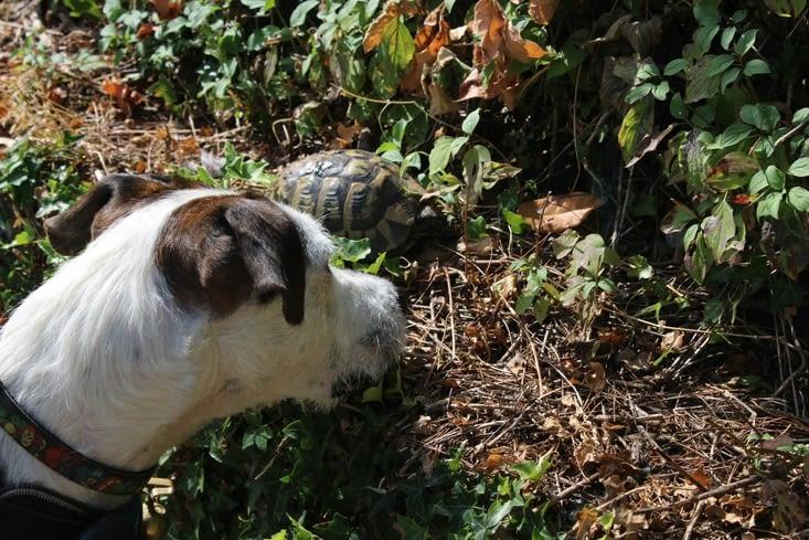 Bucky rencontre une tortue !