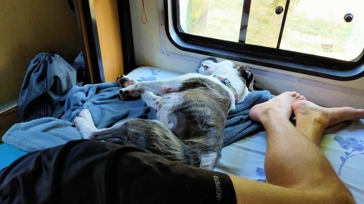 Bucky et son maître se reposent après cette longue marche