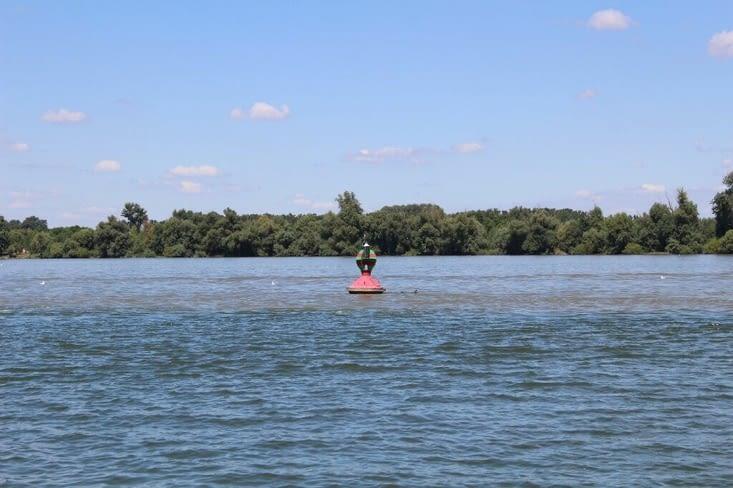 La rencontre de la Save et du Danube