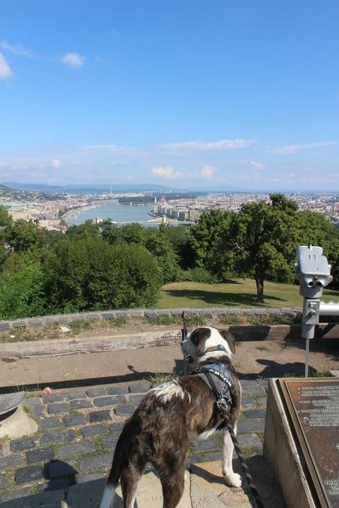 Point de vue sur la route du palais