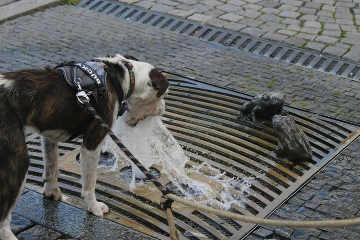 Bucky et sa passion jet d'eau !