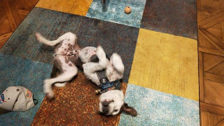 J'en connais un qui aime bien le tapis !