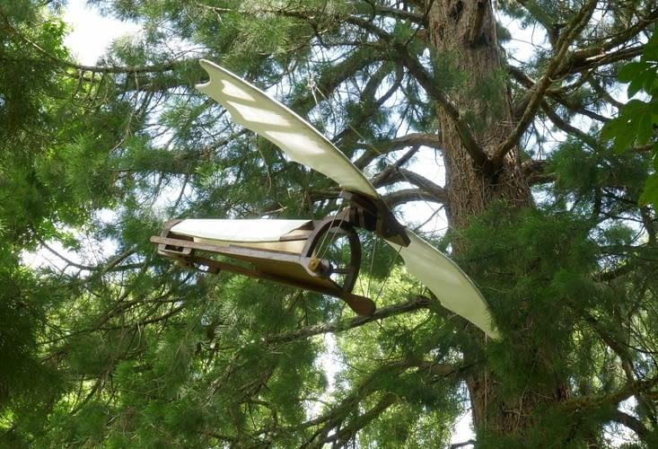 L'Ornithoptère