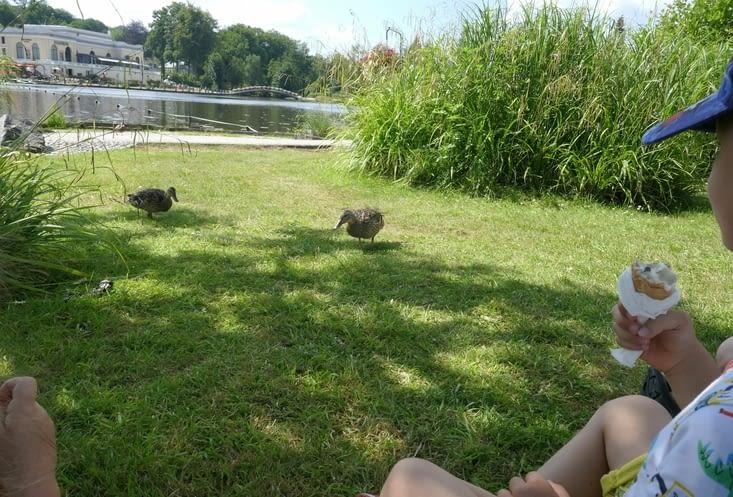 avec des canards très intéressés...