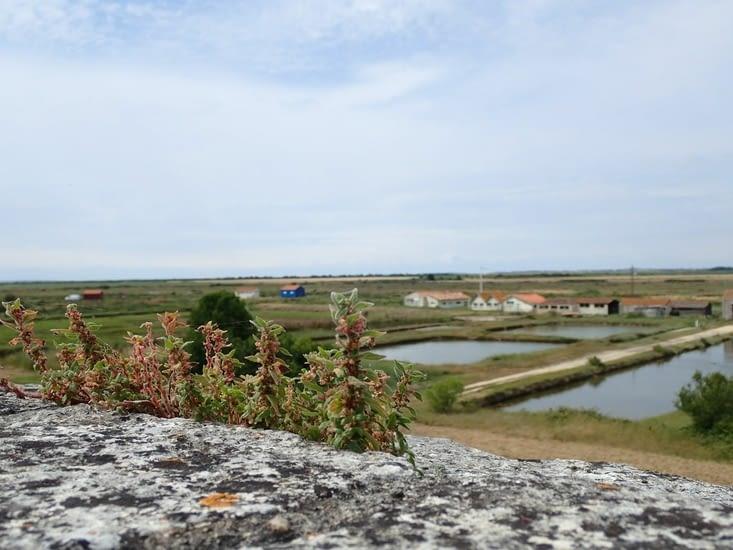 Du haut des remparts de la Citadelle de Brouage, mais la mer n'y est plus...