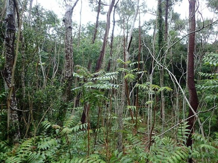 Dans la forêt de Coubre.