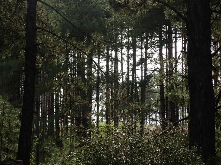 La forêt à  Fort-Mahon.