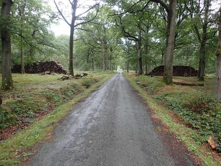 Route forestière en forêt de Rambouillet.