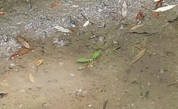 Vous les voyez? Suivez les feuilles vertes...