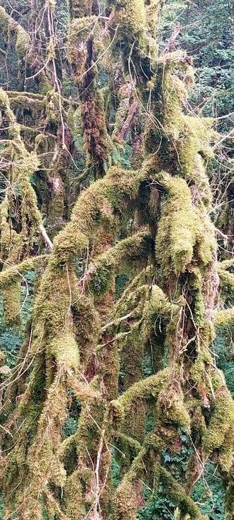 J'adore ces troncs habillés de lichens, j'arrive m'imaginer l'origine de certaines légende