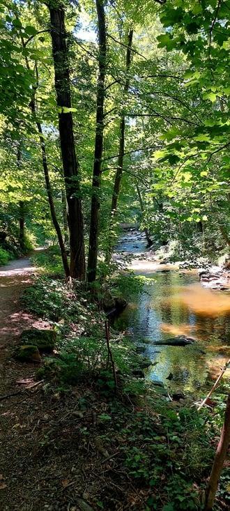 L'approche de Bourg Argental est super sympa, à plat, en forêt, bordé d'un ruisseau