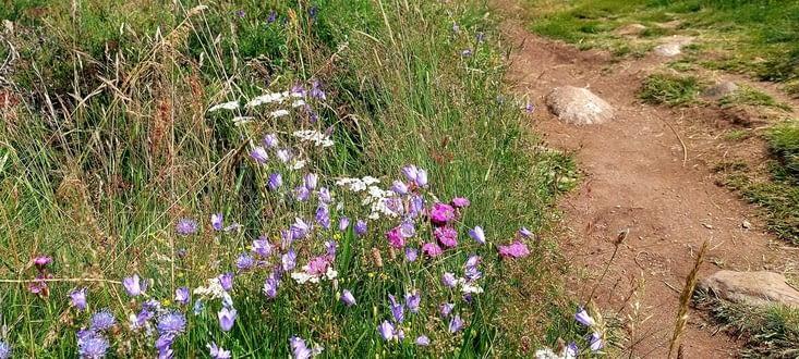 Et une flore toujours omniprésente,  diversifiée et belle